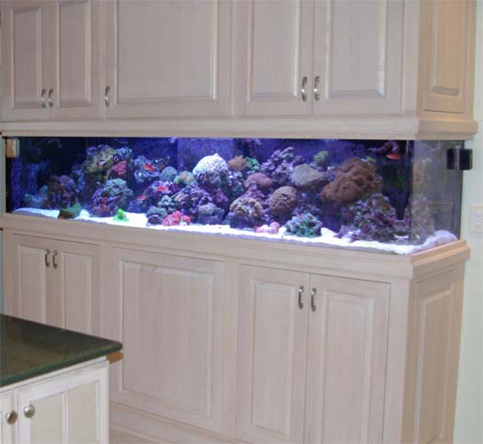 Custom Aquarium Designs